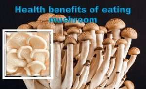 Benefits of eating mushroom