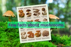 Few facts about mushroom