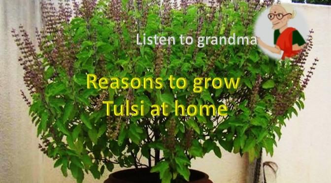 Growtulsi-healthylife-werindia