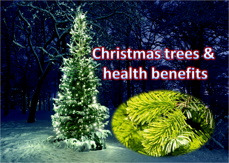 A Real Christmas Tree and Health Benefit