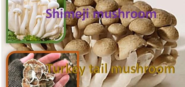 Shimeji and Turkey Tail Mushroom