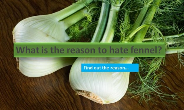 Why is the reason to hate fennel?