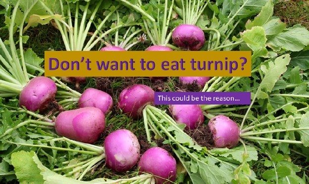 Why you don't want to eat turnip?