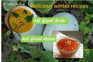 Ash gourd halwa and Ash gourd kootu
