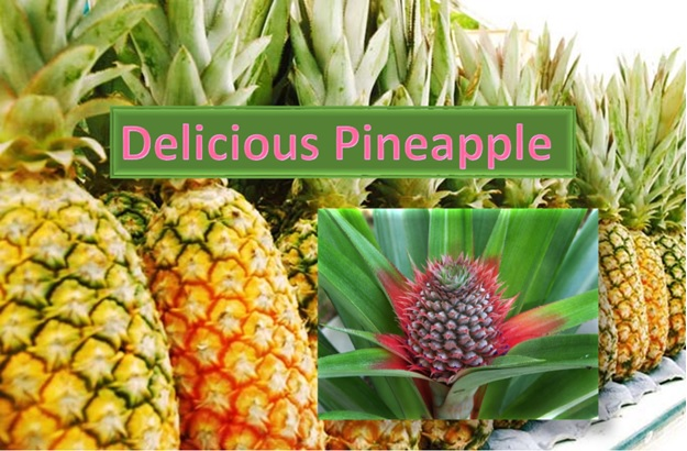 Delicious Pineapple - The most loved fruit