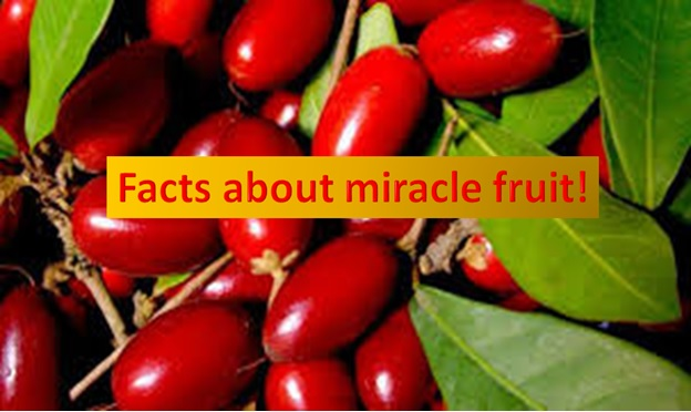 Miracle fruits makes everything sweet