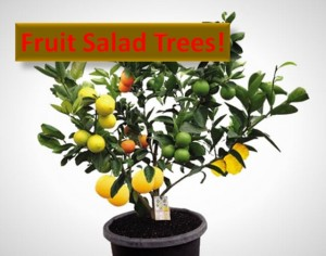 Fruit Salad Tree