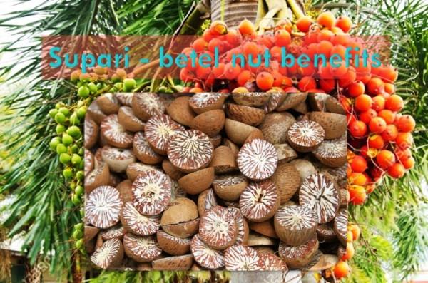 Betel nut Supari chewing benefits