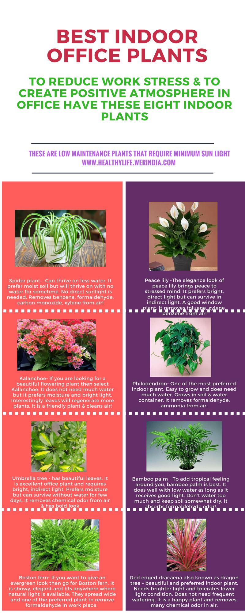 8 Best indoor office plants