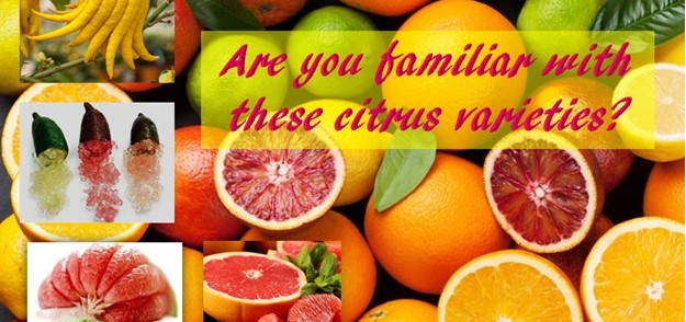 Are you familiar with these citrus varieties?