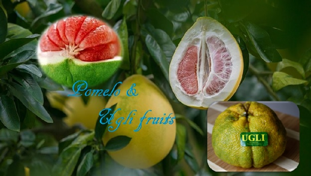 Pomelo and Ugli