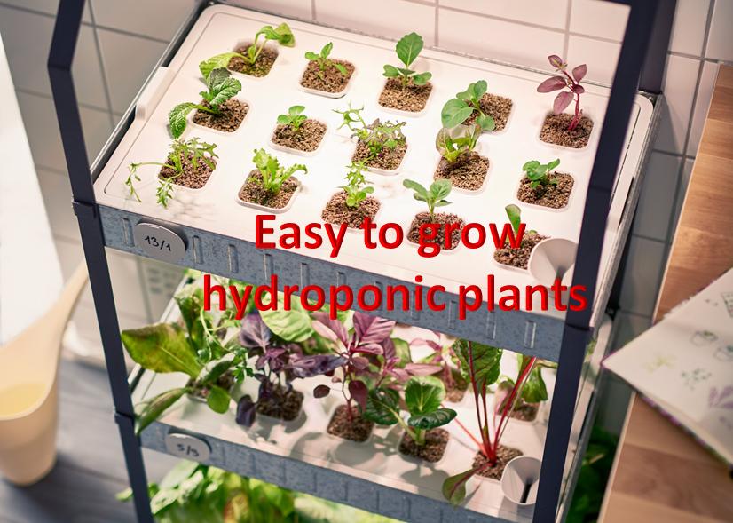 hydroponic-healthylife-werindia.jpg