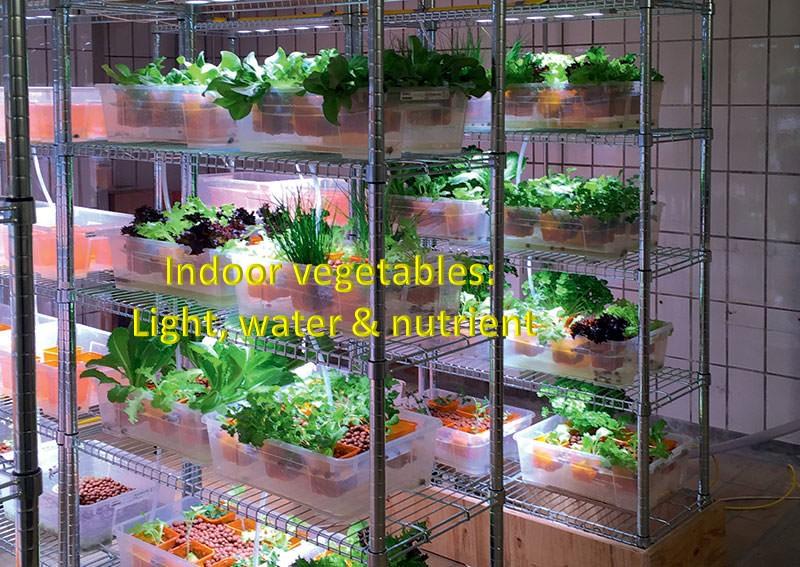 indoorgarden-healthylife-werindia