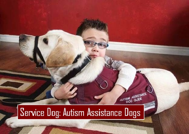 Autism Assistance Dogs