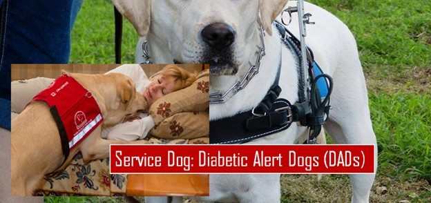 Brace/Mobility Support Dogs (BMSD)