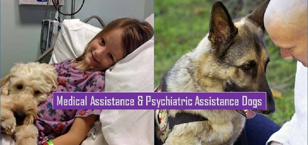 Medical Assistance and Psychiatric Assistance Dogs