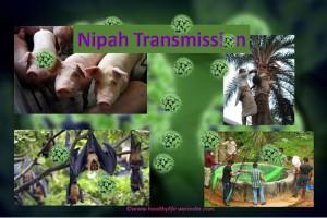 Nipah Transmission