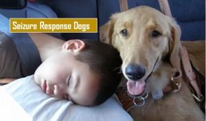 Seizure Response Dogs