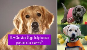 Service dogs: How do they keep humans safe?