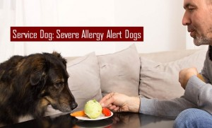 Severe Allergy Alert Dogs (AADs)