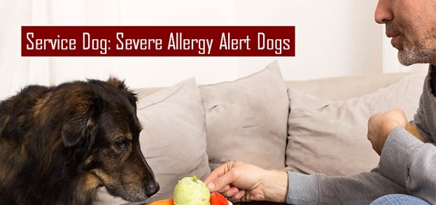 Severe Allergy Alert Dogs (AADs)