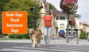 Visual Assistance Dogs – Guide dogs