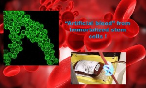 Unlimited Artificial blood from Immortalized stem cells