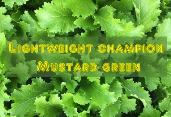 Lightweight champion Mustard greens