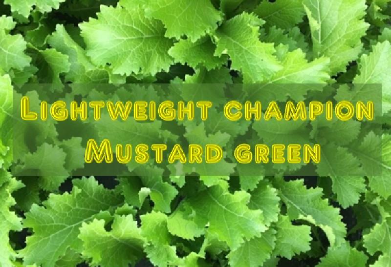 Lightweight champion Mustard greens