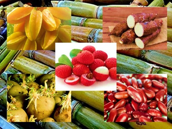 Common Poisonous Fruits and Vegetables