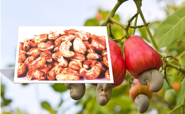 Poison in Cashews