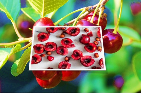 Poison in Cherries