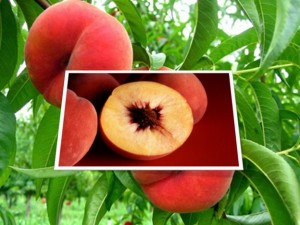 Poison in Peaches