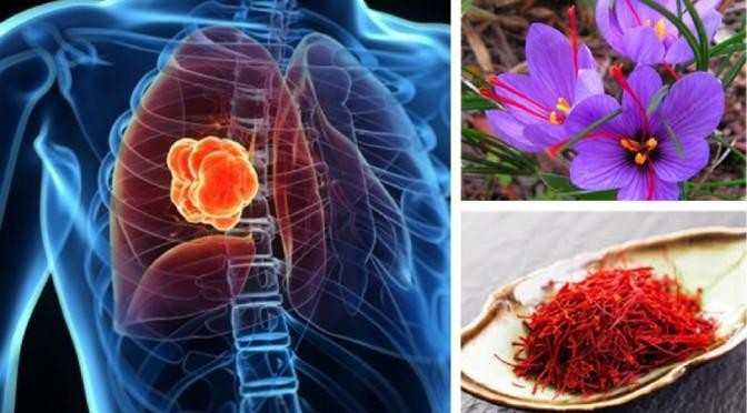 Saffron is anticancer herb