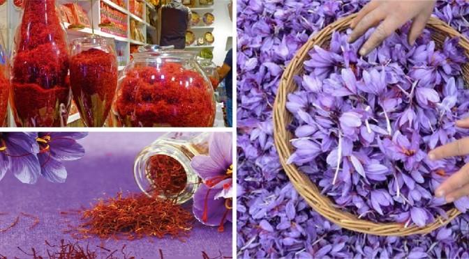 Saffron is friendly herb