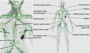 Lymphatic congestion