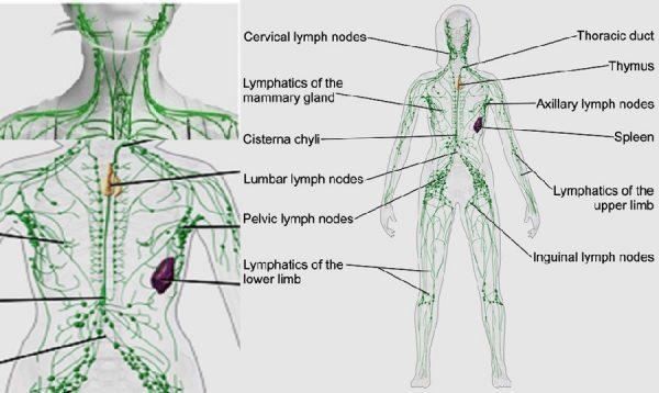 Lymphatic congestion