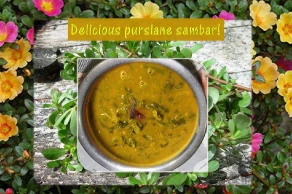 Purslane sambar