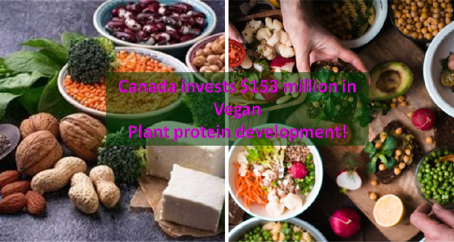 Canada plant protein Investment