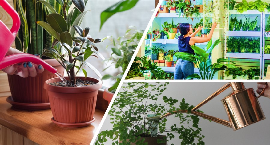 Indoor plant winter care