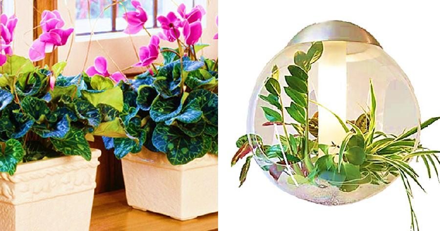 indoorplantcare-healthylife-werindia