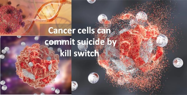 kill switch cancer cells