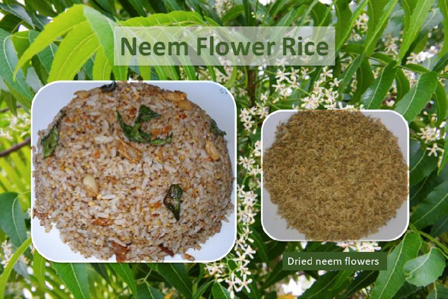 Neem flower rice