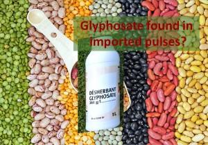 Glyphosate Pulses