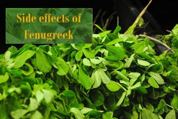 Side effects of Fenugreek