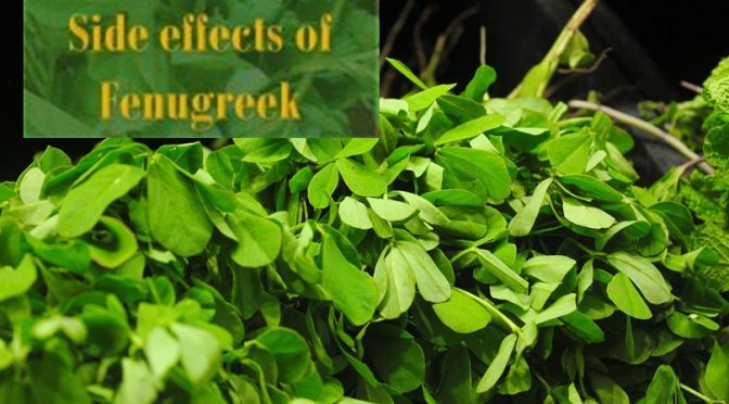 Side effects of Fenugreek