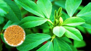 Fenugreek top 7 foods