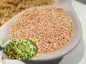 Quinoa for weight loss