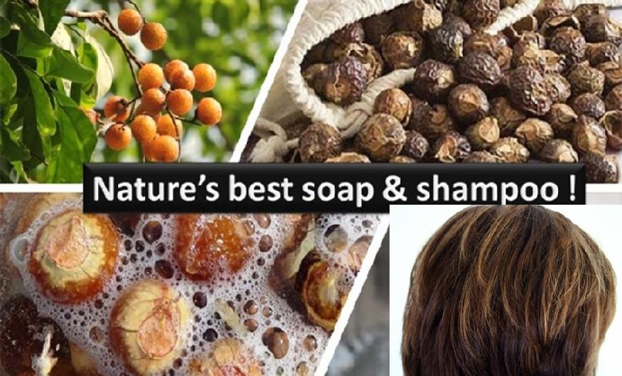 Soapnut natural shampoo