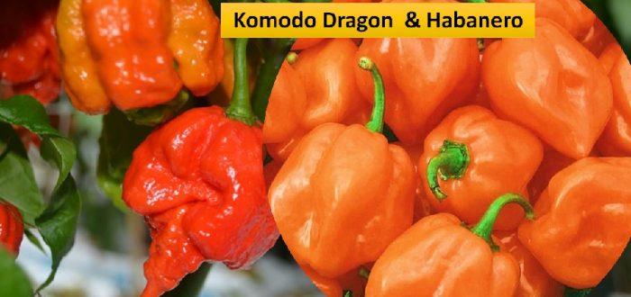 Komodo Dragon chili and Habanero